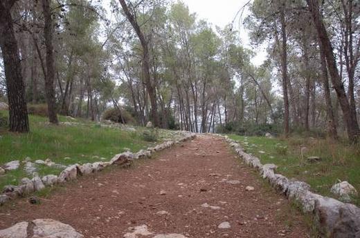 יער הקדושים
