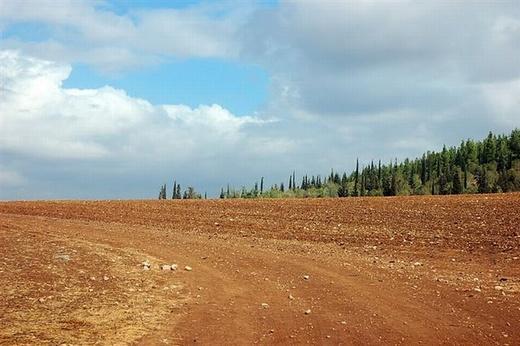 יער דבירה. גם ללא ג'יפ ניתן להינות מהמסלול צילומים יואב קווה