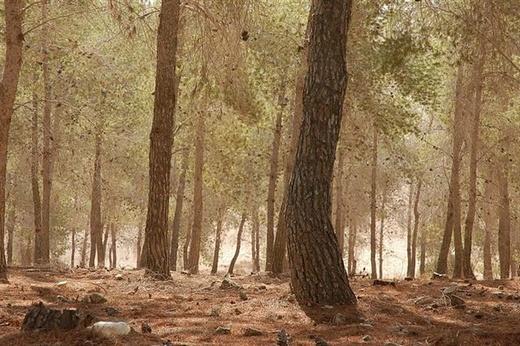 יער דבירה.  זמן לפיקניק