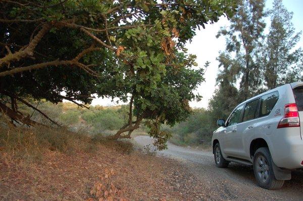 מסלול בן שמן רכב שטח קשוח