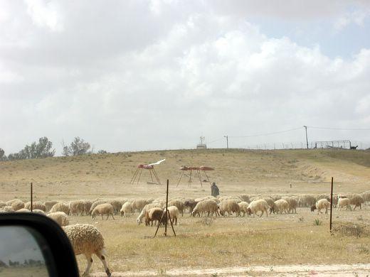 דרך הפסלים בחצרים. נמלים ענקיות וכבשים