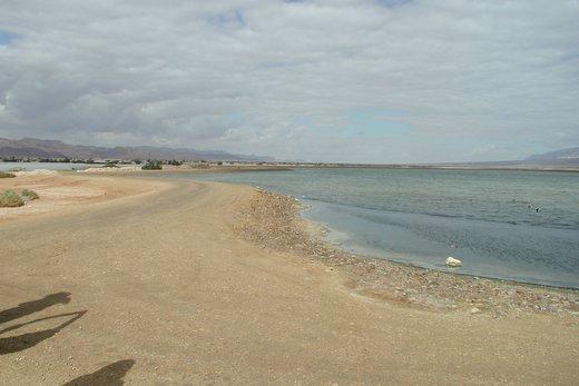 הפתעה. מים במדבר. בריכות אידוי ושפע עופות מים