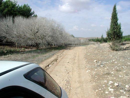 שדרה יפה של עצי בוטנה