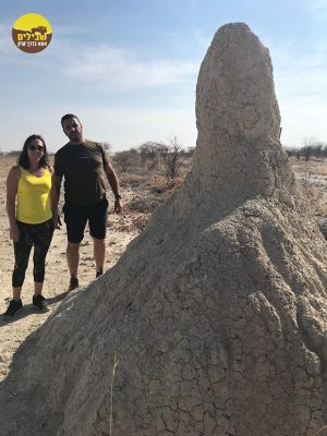 קן טרמיטים נמיביה