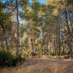יער אדוריים
