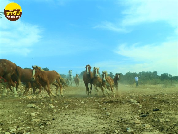 חוות סוסים רנצ'ו מניס