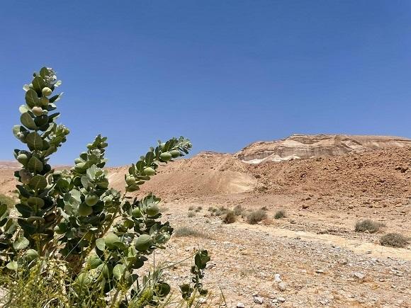 טיולי גי'פים, טיולי משפחות, מדבר יהודה, מצוק ההעתקים, פתילת המדבר
