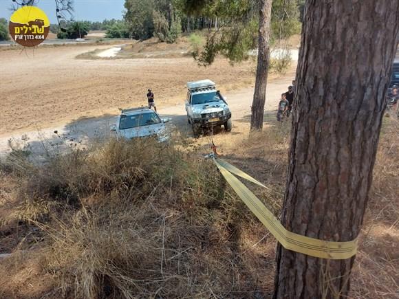 רצועה עיגון לעץ עץ