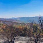 הרי ירושלים, בעקבות השריפה בהרי ירושלים